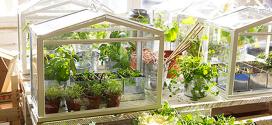 Une mini-serre pour jardiner à l'intérieur